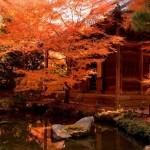 京都の紅葉2015!駐車場は椥辻駅近くに停めておトクに混雑回避♪