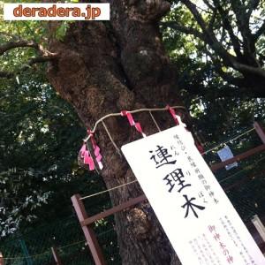 城山八幡宮の連理木